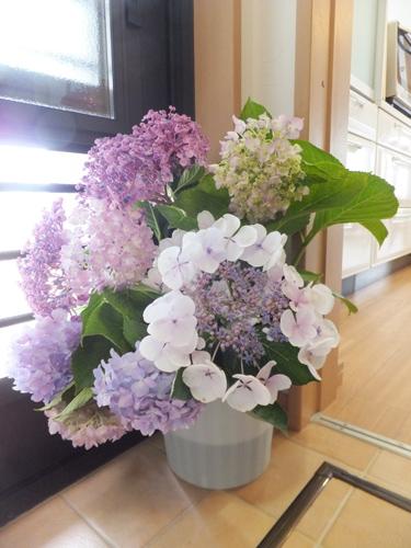 20150624紫陽花