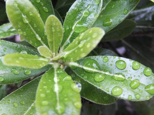 20150819雨