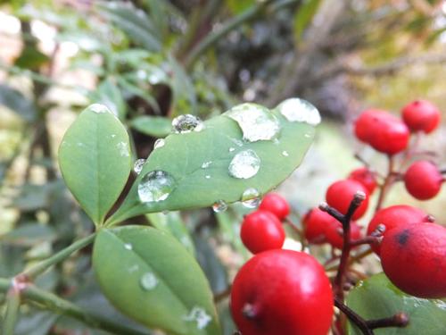 20151221雨a
